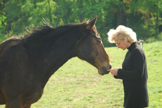 Equine Facilitated Learning Kathy Pike