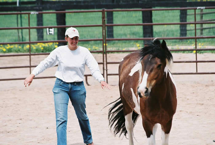 Coaching With Horses Natural Horsemanship Class