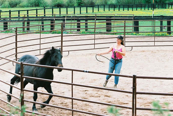 Kathy Pike Natural Horsemanship Workshop